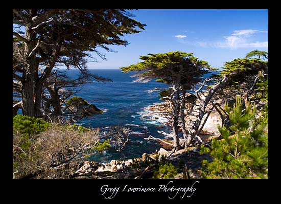 Lone Cypress Point - Coastline