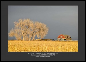 Cottonwood, Barn and Setting Sun