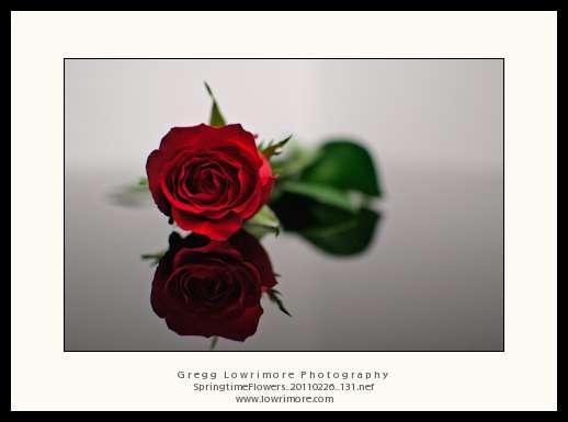 Springtime Flowers 20110226 131