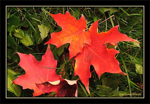 Leaves 20111020 120