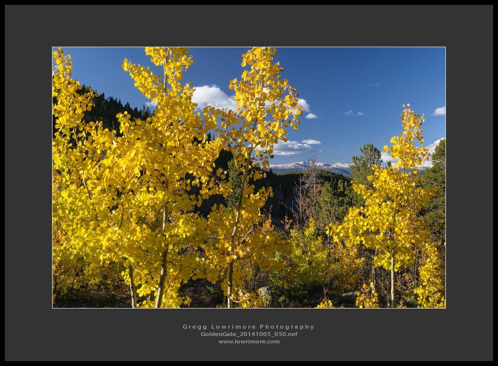 GoldenGate 20141005 050