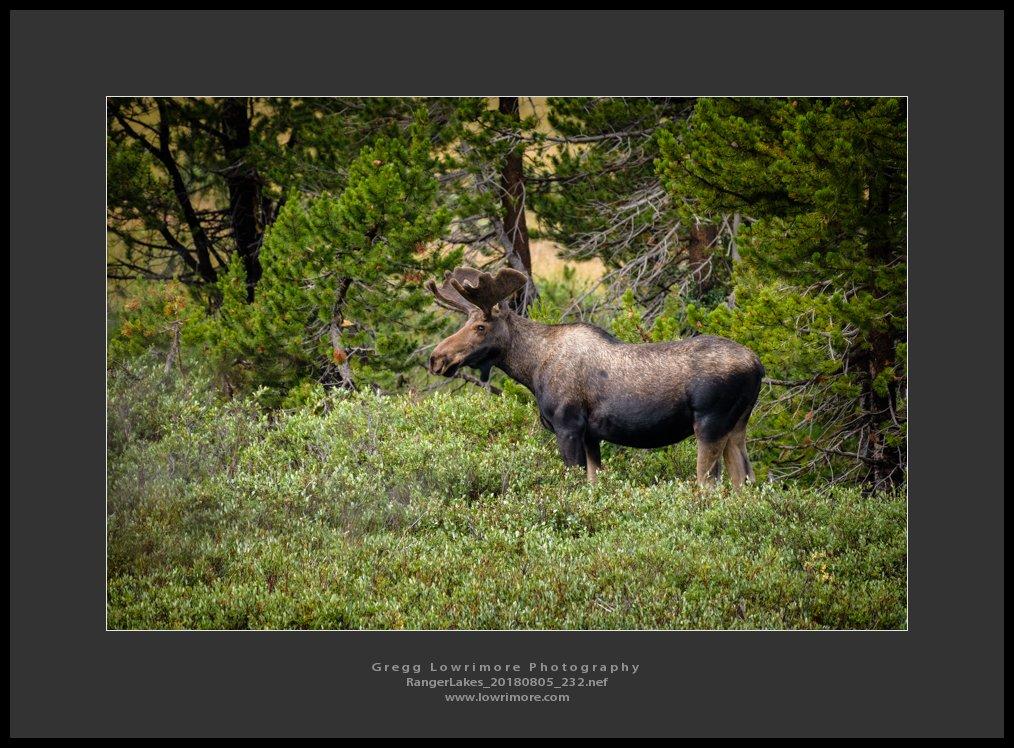 Moose - Ranger Lakes 20180805 232