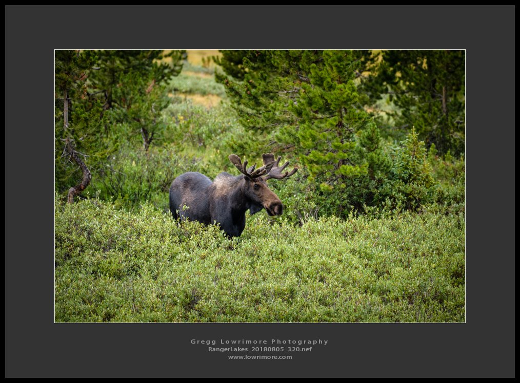 Moose - Ranger Lakes 20180805 320