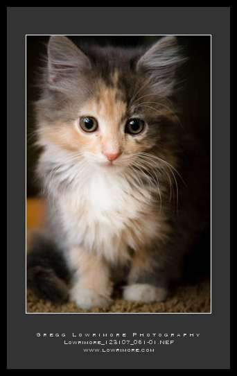 Holly, Our Kitten