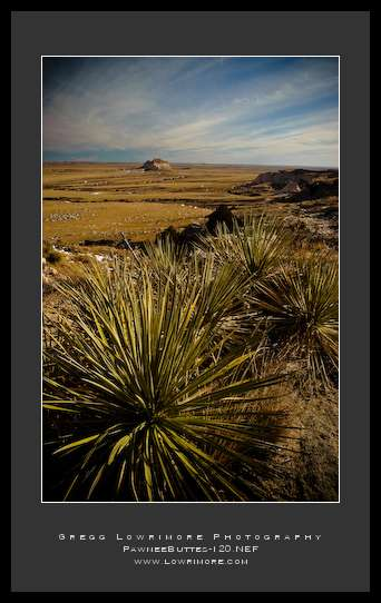 Yucca Plants and Butte