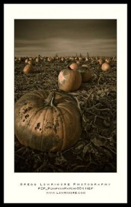 300-Look Pumpkin Patch