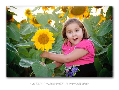Sunflowers - Sofia's Discovery