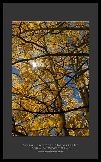 Fall River Rd 20100926 229